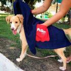 Toalha para Cachorro com Bolso Mãozinha
