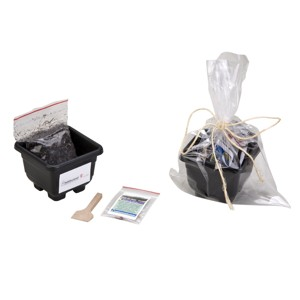 SP Ecologia - Kit celofane. Kit para cultivo embalado com celofane e amarrado com fio de juta personalizado.