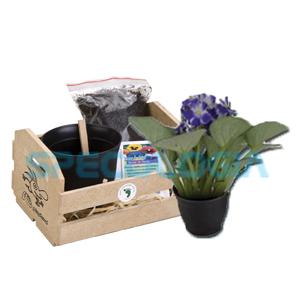 SP Ecologia - Kit para cultivo com cestinha.