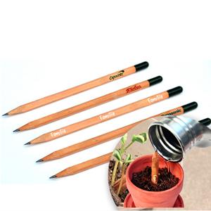 SP Ecologia - Lápis semente.