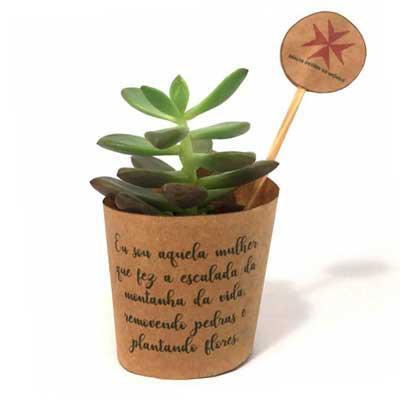 Kits & Requintes - Mini suculenta personalizada.