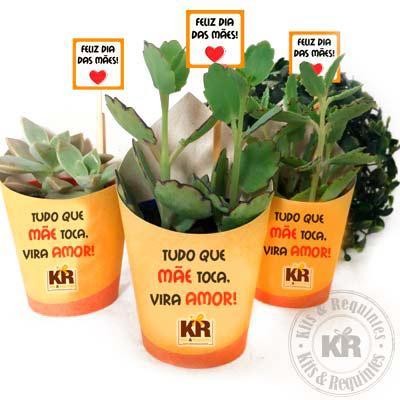 Kits & Requintes - Mini Suculenta Personalizada