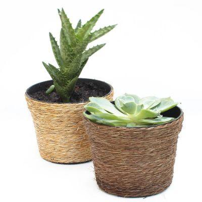 Make Brazil - Plantas suculentas personalizadas