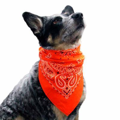 Thap  Brindes - Lenço para Pet Personalizado do seu jeito, gravação com qualidade digital.